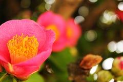 Красивый цветок в саде Стоковое Изображение RF