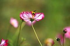 Красивый цветок в цветении стоковая фотография rf