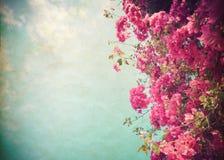 Красивый цветок дерева в лете Стоковая Фотография RF