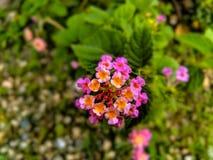 Красивый цветок стоковые изображения