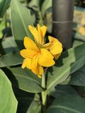 Красивый цветок зимы стоковые фото