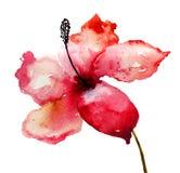 Красивый цветок лилии Стоковое Изображение