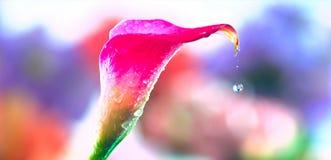 Красивый цветок и падение воды стоковая фотография rf