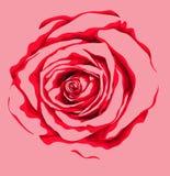 Красивый цветок красной розы с влиянием изолированного чертежа акварели на белой предпосылке Стоковые Изображения