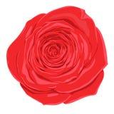 Красивый цветок красной розы с влиянием изолированного чертежа акварели на белой предпосылке Стоковое Изображение