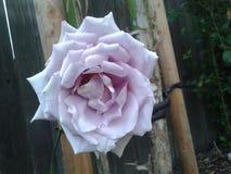 Красивый цветок на свете дня которые показывают природу стоковые изображения