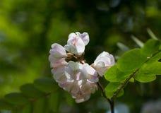 Красивый цветок одна из самых лучших тварей природы Стоковое фото RF