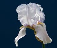 Красивый цветок одна из самых лучших тварей природы Стоковые Изображения