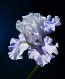 Красивый цветок одна из самых лучших тварей природы Стоковые Изображения RF