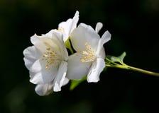 Красивый цветок одна из самых лучших тварей природы Стоковые Фото
