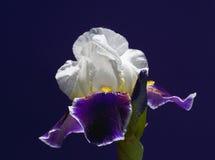 Красивый цветок одна из самых лучших тварей природы Стоковая Фотография RF