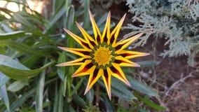 Красивый цветок природы Стоковые Изображения