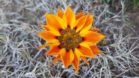 Красивый цветок природы Стоковое Изображение