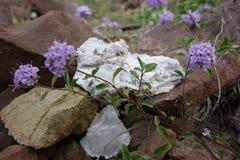 Красивый цветок северного Pamirs Стоковые Изображения RF