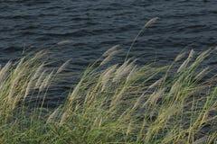 Красивый цветок травы в лете Стоковое Фото