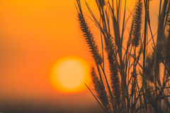 Красивый цветок травы Стоковое Изображение