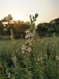 Красивый цветок утра Стоковое Изображение