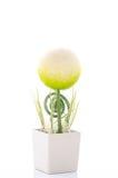 Красивый цветок формы сферы в баке белого квадрата Стоковые Изображения RF