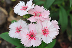 Красивый цветок Стоковые Фото