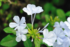 Красивый цветок стоковые фотографии rf