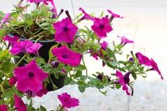 Красивый цветок Стоковое Фото
