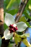 Красивый цветок, Стоковое Изображение RF