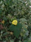 Красивый цветок Стоковая Фотография RF