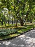 Красивый цветочный сад в Бангкоке Thaialnd стоковая фотография rf