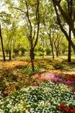 Красивый цветочный сад в стране Таиланде стоковая фотография rf