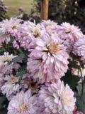 Красивый цветочный сад в ludhiana Стоковое фото RF