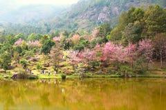 красивый цветочный сад в chiangmai Стоковое фото RF