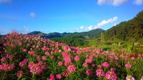 красивый цветочный сад в chiangmai Стоковая Фотография