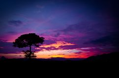 Красивый цвет захода солнца неба и одного дерева Стоковое фото RF