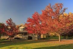 Красивый цвет падения над зоной Глена дуба стоковые фото