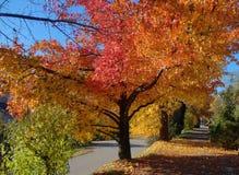 Красивый цвет Стоковое фото RF
