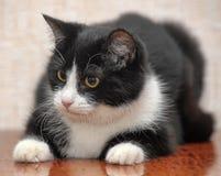 Красивый черно-белый молодой кот стоковое фото rf