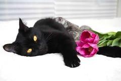 Красивый черный кот с котятами Стоковое Фото