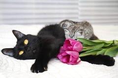 Красивый черный кот с котятами Стоковая Фотография RF