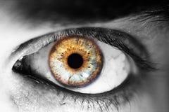Красивый человеческий глаз, макрос, конец вверх по голубому, желтый, коричневый, зеленый цвет Стоковая Фотография RF