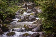 Красивый чистый поток горы Горы Tatra Стоковое Изображение RF