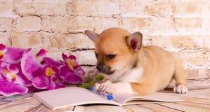 Красивый щенок лежа на тетради Стоковые Фото