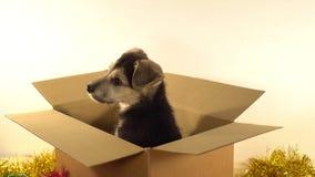 Красивый щенок сидит в коробке почтового сбора с украшениями рождества и Нового Года Стоковые Изображения RF
