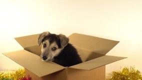 Красивый щенок сидит в коробке почтового сбора с украшениями рождества и Нового Года Стоковая Фотография