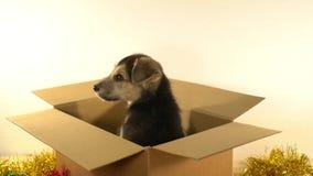Красивый щенок сидит в коробке почтового сбора с украшениями рождества и Нового Года Стоковые Фото