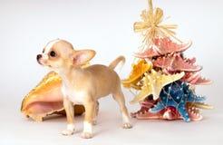 Красивый щенок чихуахуа рядом с игрушками стоковые фотографии rf