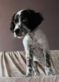 Красивый щенок stading на кровати Стоковое фото RF