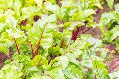 Красивый экологический органический сад Стоковые Фотографии RF