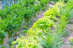 Красивый экологический органический сад Стоковое Фото