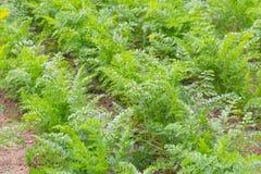 Красивый экологический органический сад Стоковые Фото
