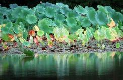 Красивый японский сад в Киото Японии Стоковая Фотография RF